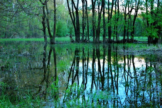 Morava's_flooded_forest_03